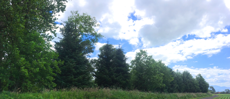 Riparian trees wilson 2